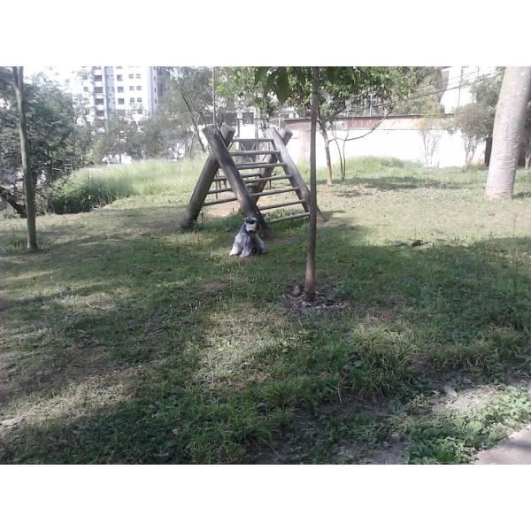 Onde Tem Adestrador para Cão no Jardim Paulista - Serviço de Adestrador de Cachorro Preço