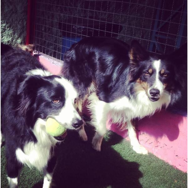 Onde Tem Adestradores para Cachorro no Campo Limpo - Adestrador de Cãesno Itaim Bibi