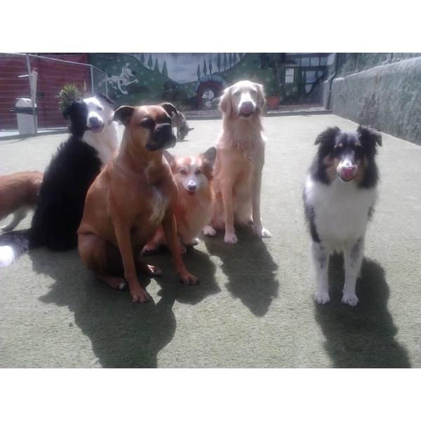 Onde Tem Adestradores para Cachorro no Jardins - Serviços de Adestradores de Cães
