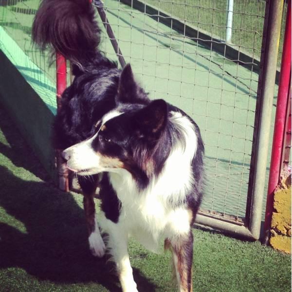 Onde Tem Adestradores para Cães em Taboão da Serra - Adestrador de Cãesem SP