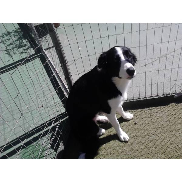 Onde Tem Adestradores para Cães no Rio Pequeno - Adestradores de Cães