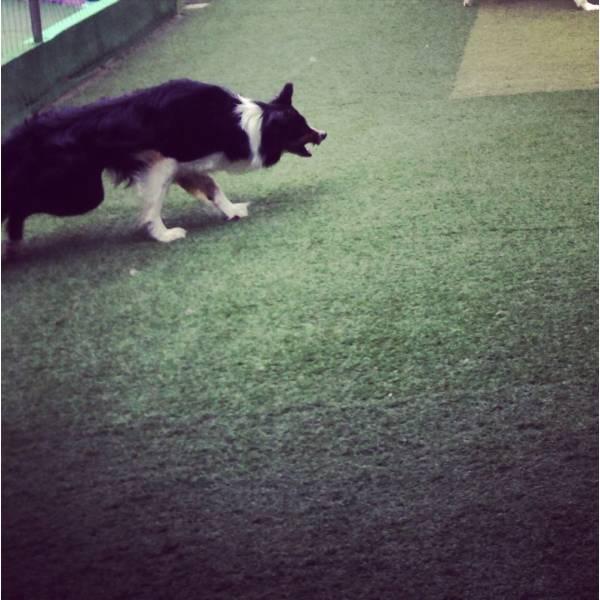 Onde Tem Adestradores para Cão em Santana de Parnaíba - Adestrador de Cãesno Itaim Bibi