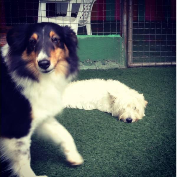 Onde Tem Adestradores para Cão na Vila Mariana - Adestradores de Cães