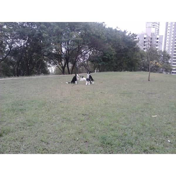 Onde Tem Adestradores para Cão no Itaim Bibi - Serviço de Adestrador de Cães