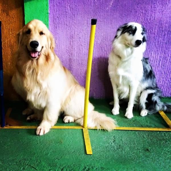 Onde Tem Adestramento de Cachorro no Jardim América - Adestramento de Cães no Brooklin