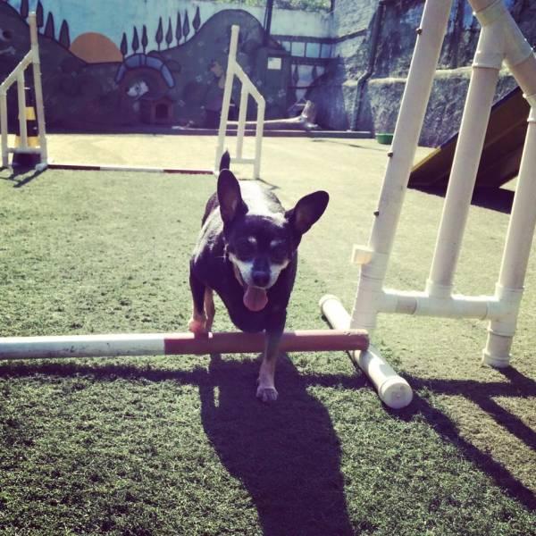 Onde Tem Adestramento de Cachorros em Santana de Parnaíba - Adestramento Canino