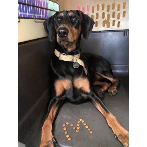 Onde Tem Adestramento para Cachorro no Jockey Club - Adestramento de Cão