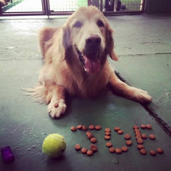 Onde Tem Adestramento para Cachorros em Jandira - Adestramento de Cães em SP