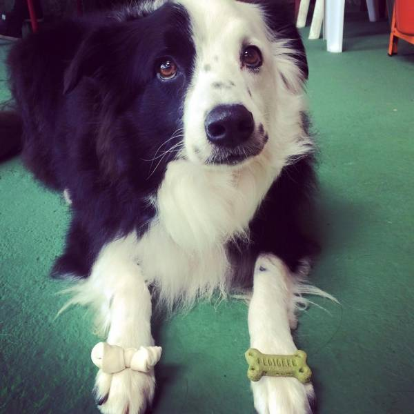 Onde Tem Adestramento para Cão no Campo Limpo - Adestramento de Cães