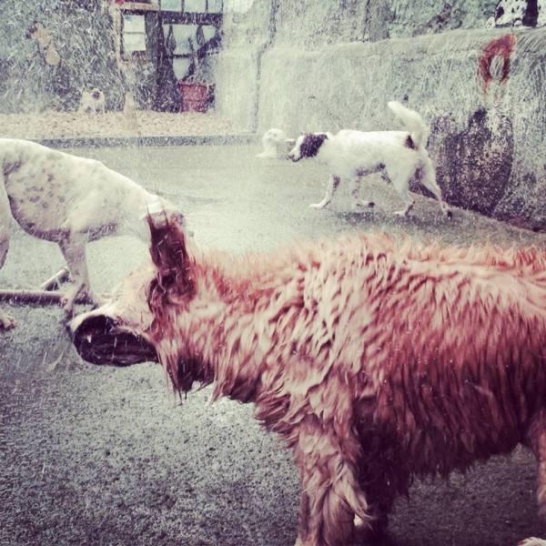 Onde Tem Daycare para Cão  no Jardim Europa - Daycare Cachorro
