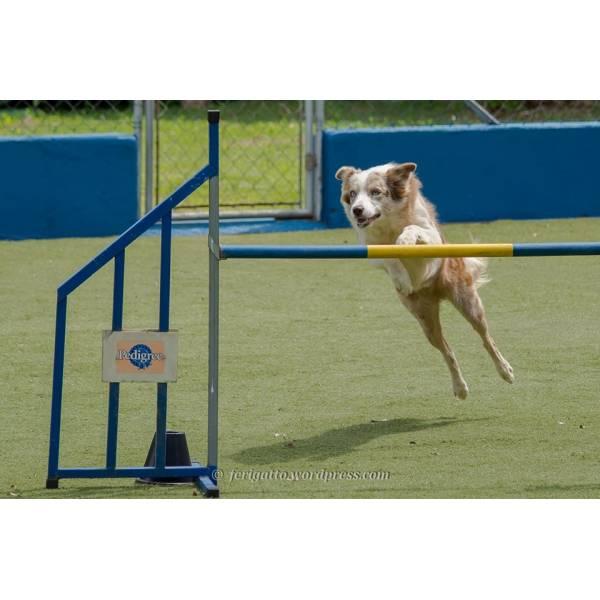 Onde Tem Hotéis para Cão em Taboão da Serra - Hotel para Cães na Vila Madalena