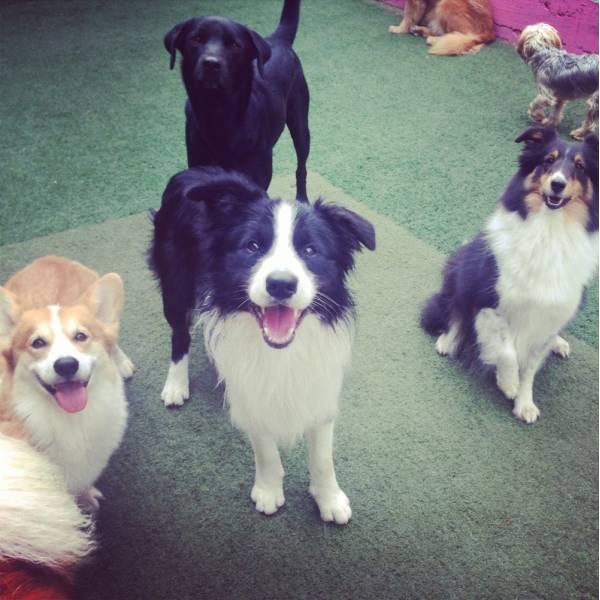 Preço de Adestrador para Cachorro em Itapevi - Adestrador de Cãesem Santo Amaro