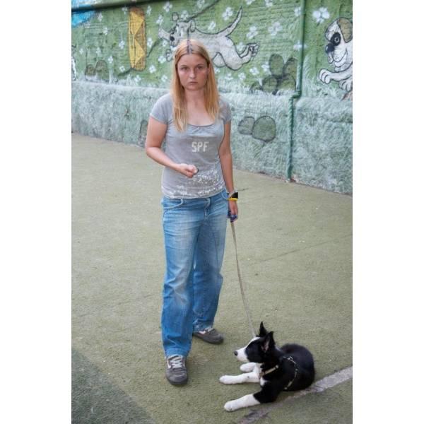 Preço de Adestrador para Cachorro no Jardim São Luiz - Adestrador de Cãesem Cotia