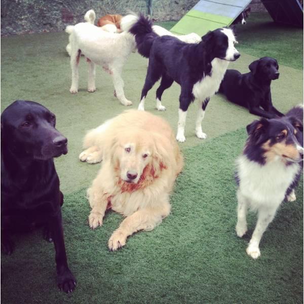 Preço de Adestrador para Cachorro no Pacaembu - Adestrador de Cãesem Santo Amaro