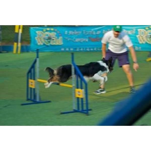 Preço de Adestrador para Cachorros em Raposo Tavares - Adestrador Profissional