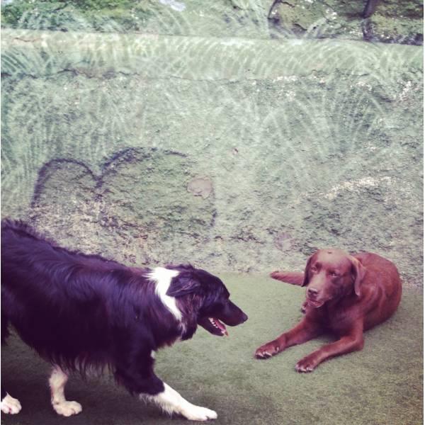 Preço de Adestrador para Cachorros em Santo Amaro - Adestrador de Cãesem Santo Amaro