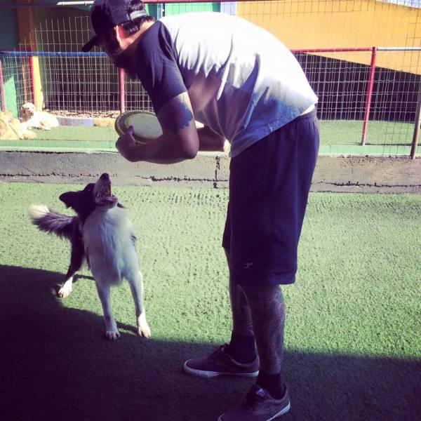 Preço de Adestrador para Cão na Vila Leopoldina - Adestrador de Cãesna Berrini