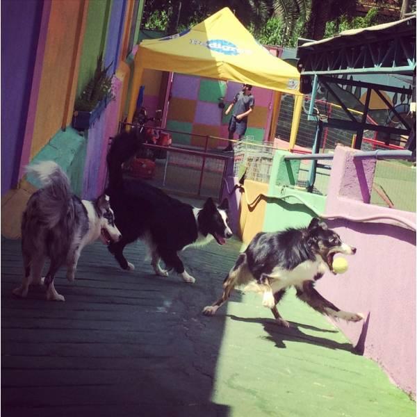 Preço de Adestrador para Cão no Ibirapuera - Adestrador de Cãesna Vila Madalena