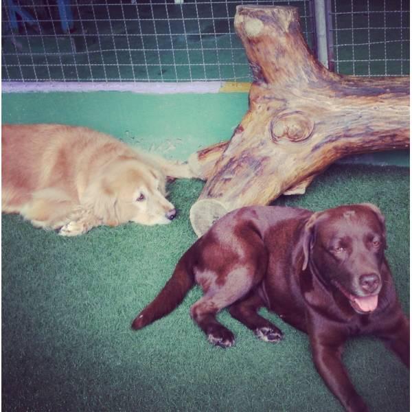 Preço de Adestradores de Cachorro em Moema - Adestrador de Cãesem Santo Amaro