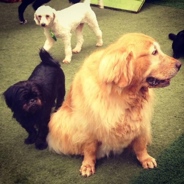 Preço de Adestradores para Cachorro no Jardim Europa - Adestrador de Cãesem Santo Amaro