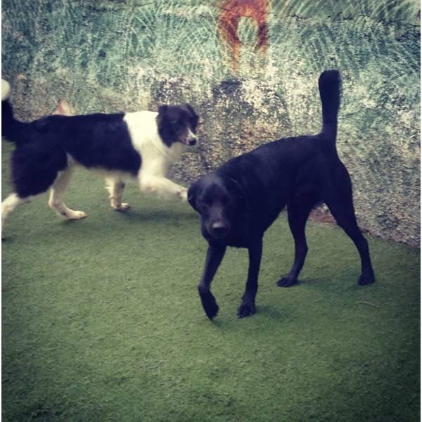 Preço de Adestradores para Cães em Barueri - Adestrador de Cãesem Santo Amaro