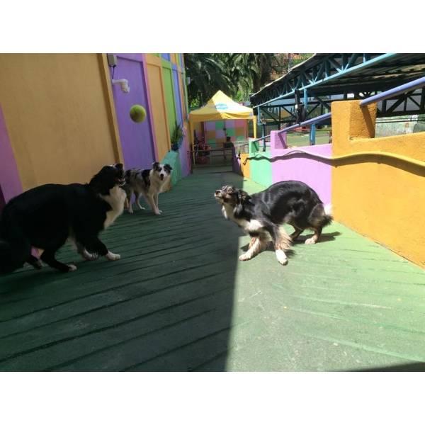 Preço de Adestradores para Cães na Pedreira - Adestrador de Cãesna Vila Madalena