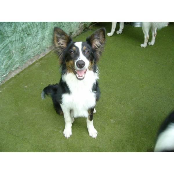 Preço de Adestramento de Cachorro em Santana de Parnaíba - Adestramento de Cães em Cotia