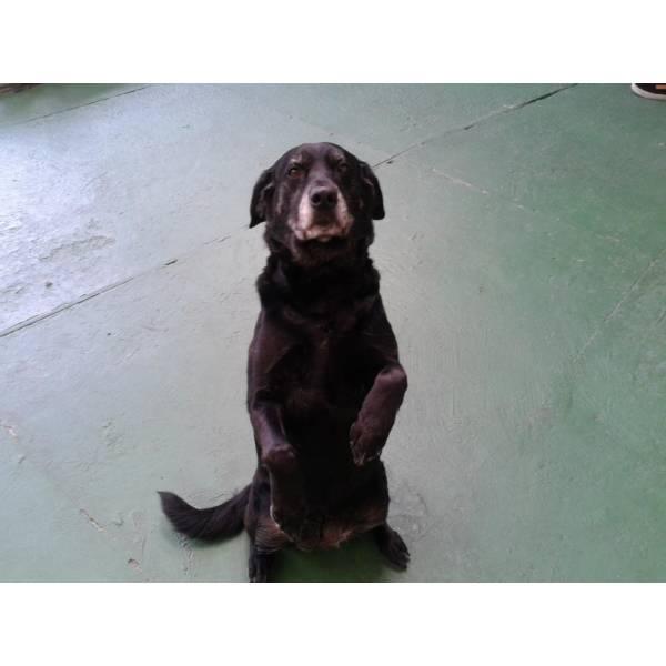 Preço de Adestramento de Cachorros em Embu das Artes - Serviço de Adestramento de Cachorros