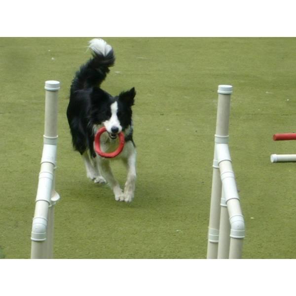 Preço de Adestramento de Cães na Vila Sônia - Adestramento de Cachorros