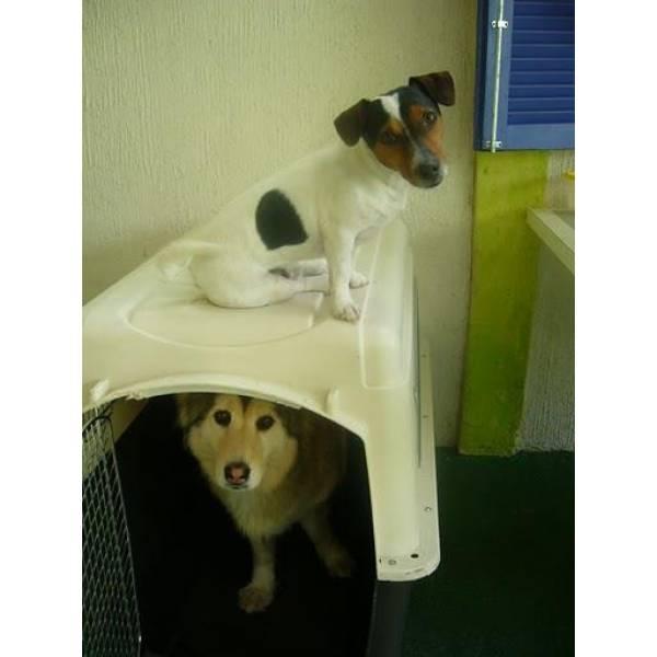 Preço de Adestramento de Cão em Santo Amaro - Adestramento Cachorro