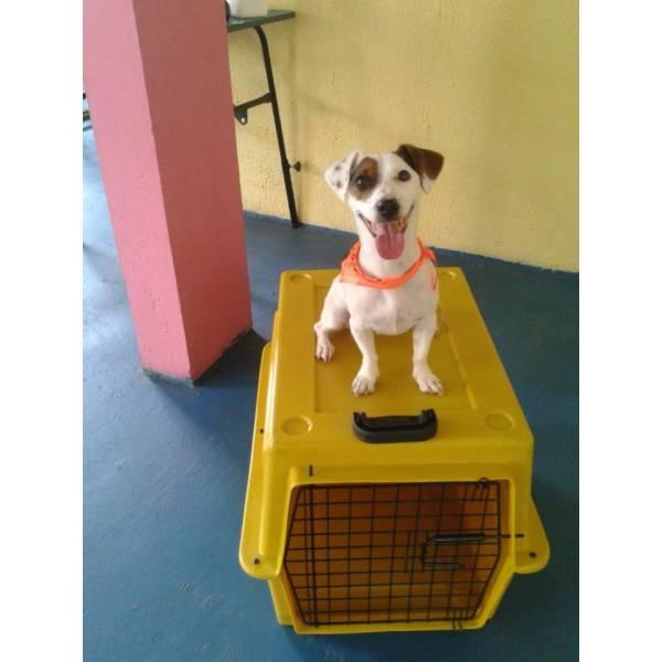 Preço de Adestramento para Cachorros em Osasco - Adestramento de Cães em São Paulo