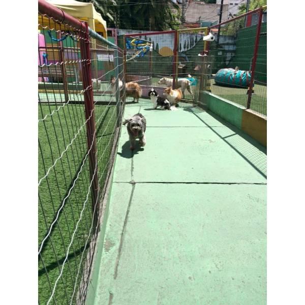 Preço de Daycare Canino no Morumbi - Serviço de Daycare Canino