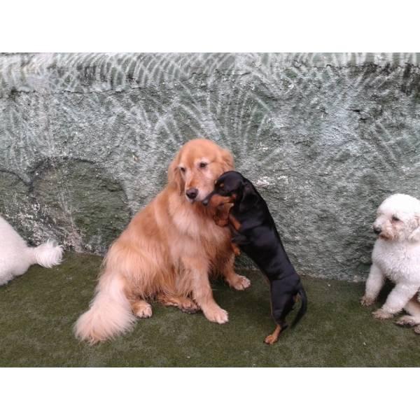 Preço de Daycare de Cachorro na Vila Andrade - Serviço de Daycare Canino