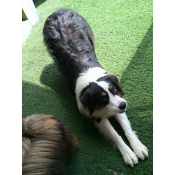 Preço de Daycare de Cachorros no Pacaembu - Serviço de Daycare Canino
