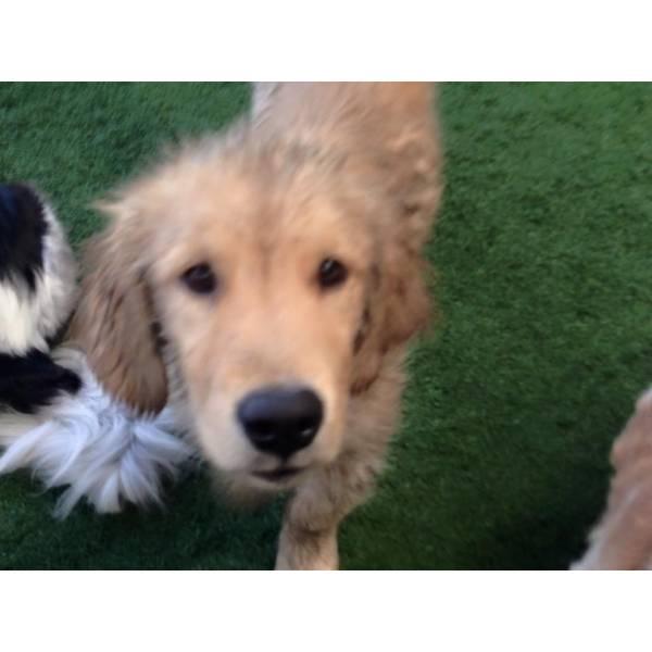 Preço de Daycare de Cão  na Cidade Jardim - Serviço de Daycare Canino