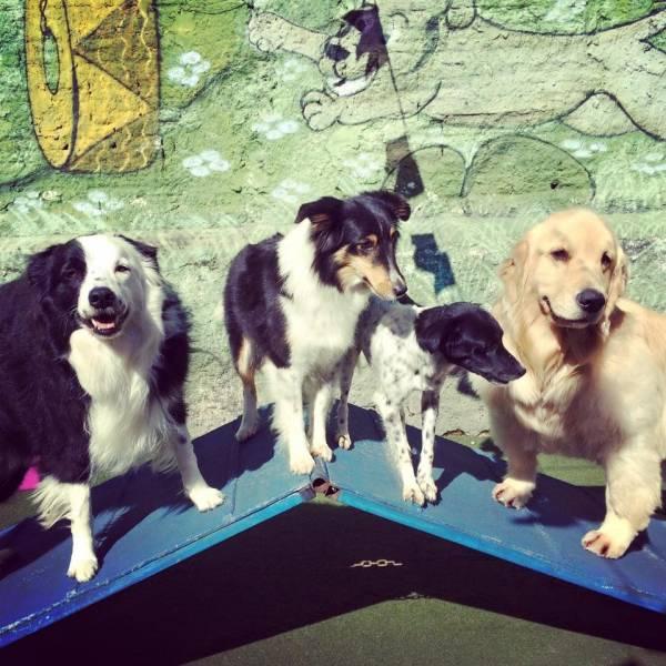 Preço de Daycare no Alto de Pinheiros - Serviço de Daycare Canino