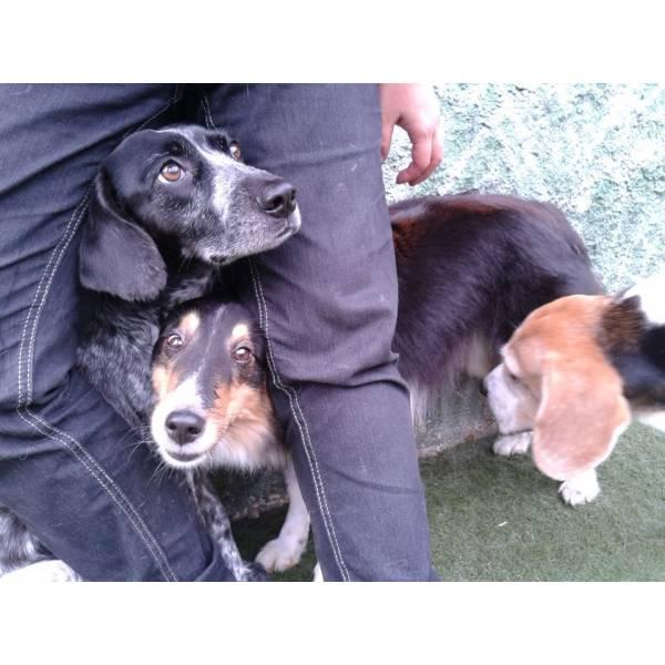 Preço de Daycare para Cachorro em Jandira - Serviço de Daycare Canino
