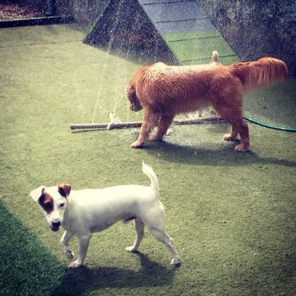 Preço de Daycare para Cachorros no Itaim Bibi - Serviço de Daycare Canino