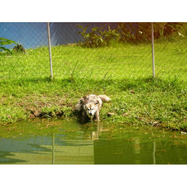 Preço de Hotéis de Cachorro na Vila Andrade - Hotel para Cães em SP