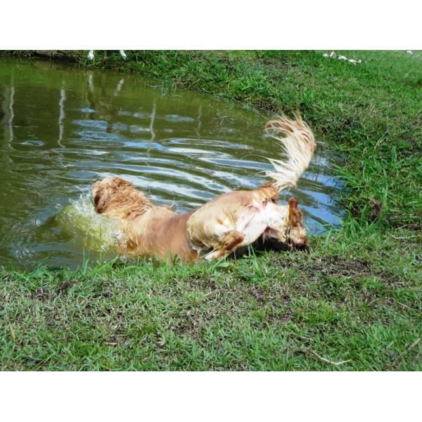 Preço de Hotéis de Cachorros em Raposo Tavares - Hotel para Cães em SP