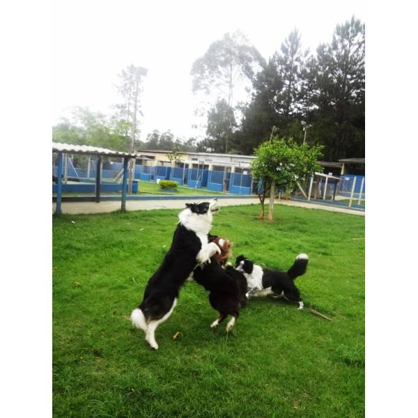Preço de Hotéis de Cães em Perdizes - Hotel para Cães em SP