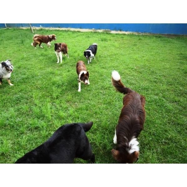 Preço de Hotéis de Cão no Jardim Paulistano - Hotel para Cães em SP