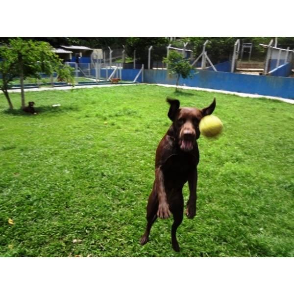 Preço de Hotéis para Cães no Socorro - Hotel para Cães em SP