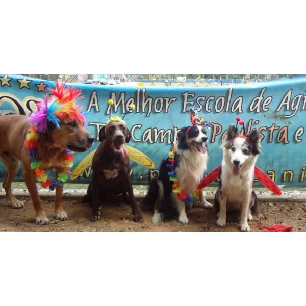 Preço de Hotéis para Cão em Embu das Artes - Hotel para Cães em SP