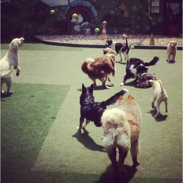 Preço de Hoteizinhos para Cães  no Alto de Pinheiros - Hoteizinhos para Cães