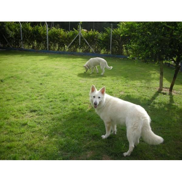Preço de Hotel de Cachorros em Moema - Hotel para Cães em SP