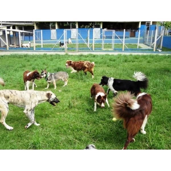 Preço de Hotel de Cães no Brooklin - Hotel para Cães em SP
