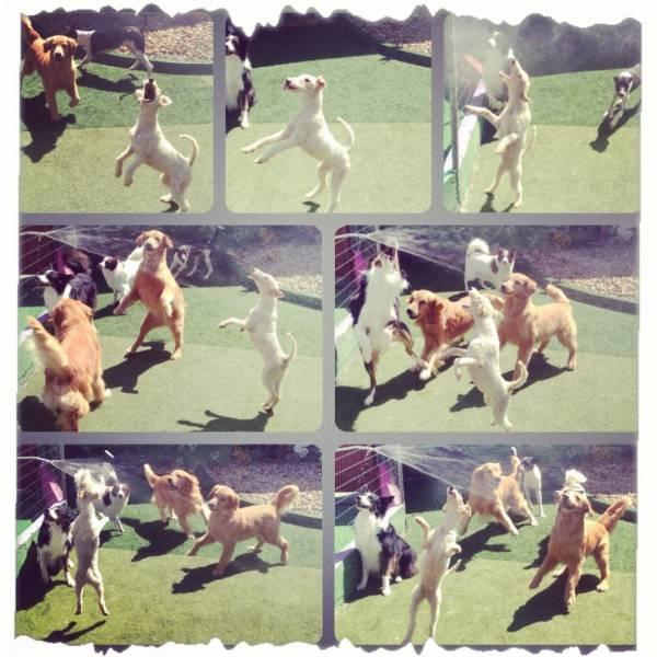 Preços  Adestradores para Cachorro no Morumbi - Adestrador de Cãesno Brooklin