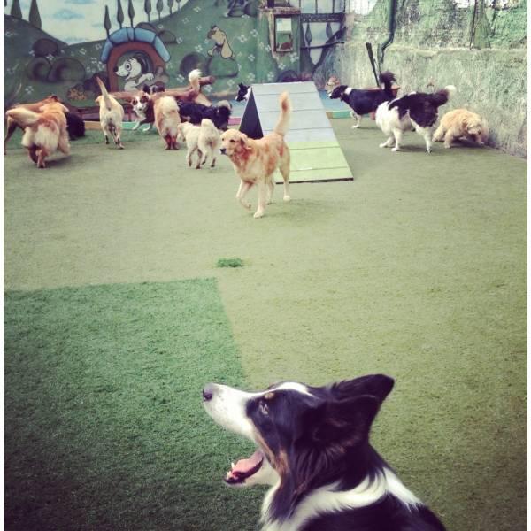 Preços de Adestrador para Cachorro em Itapecerica da Serra - Adestrador de Cãesno Brooklin