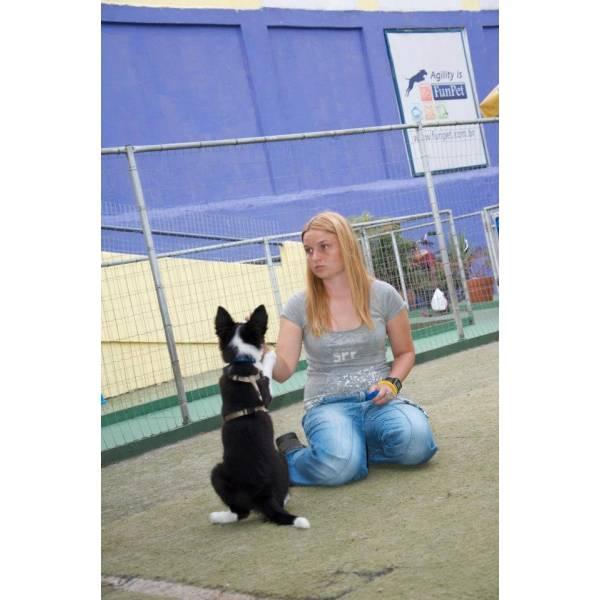 Preços de Adestrador para Cachorro na Cidade Jardim - Adestrador de Cãesem Cotia